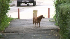 Cui aparţineau câinii găsiţi în zona Obor, unde a fost descoperit trupul neînsufleţit al unei femei cu muşcături pe corp