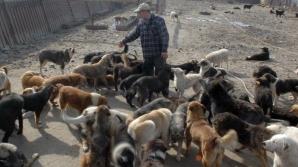 ASPA: 89 de câini ridicaţi dintr-un adăpost din curtea ADP Sector 6 pentru că nu erau înregistraţi