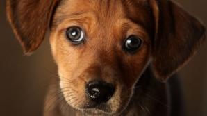 """De ce adoptă câinii priviri """"rușinate"""""""