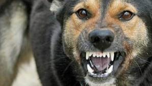 Niţu, despre femeia găsită moartă în parc: Nu sunt date că decesul s-ar datora muşcăturilor de câine