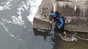 Un clujean a salvat un câine din apele reci ale râului Someşul Mic