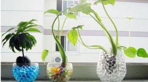 9 plante de interior magice care atrag dragostea, bucuria şi prosperitatea