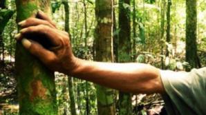 Bărbatul rătăcit într-o pădure de lângă Lugoj, recuperat. SALVATORII, ULUIŢI de starea acestuia