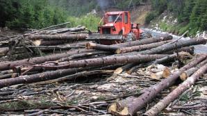 Peste 400 de persoane protestează în Capitală faţă de lipsa alocării de fonduri pentru păduri