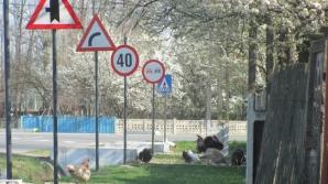 Satul cu peste 200 de indicatoare rutiere