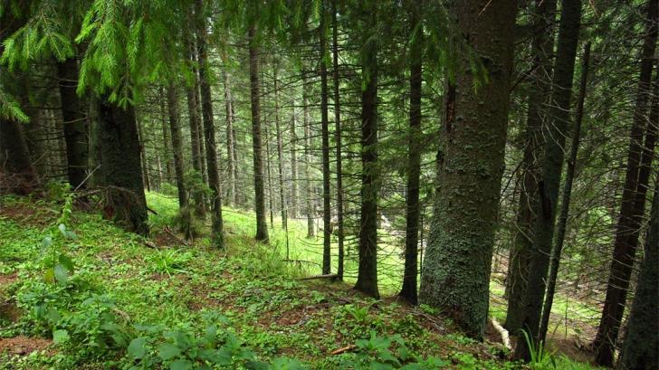 MARELE JAF al retrocedării pădurilor. De multe ori, beneficiarii nu sunt adevăraţii propietari
