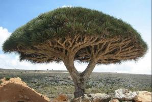 Socotra - Oceanul Indian
