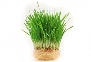 Beneficii ulei de germeni de grâu