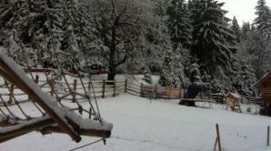Zăpadă abundentă la Păltiniș