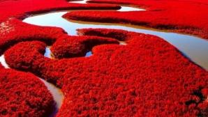 Plaja roşie din China