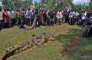 Au capturat MONSTRUL care părea să facă ravagii în tot satul, după ce a mâncat mai multe persoane