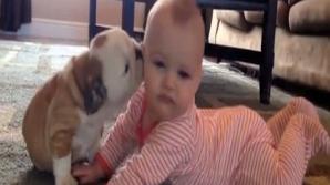 Prima întâlnire dintre un buldog şi un copil - video viral