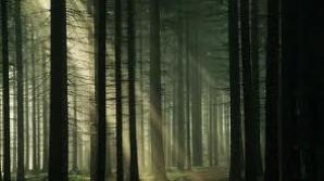 Pădurea Hoia-Baciu în topul locurilor de coşmar