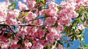 Temperaturile ridicate din ianuarie au creat probleme pomilor fructiferi