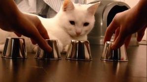 KIDO, cea mai desteapta pisica din lume
