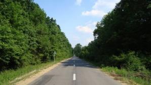 Perdele forestiere de-a lungul A2