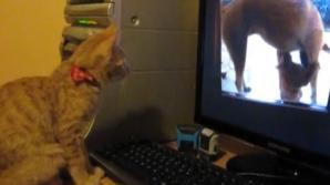 Ce face o pisică în fața unui monitor