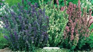 Ce plante vindecătoare te ajută, în funcţie de zodie