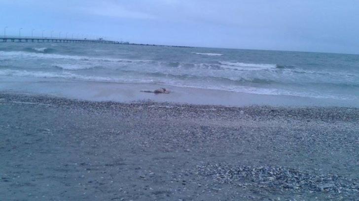 Tânărul a fost găsit mort pe plajă