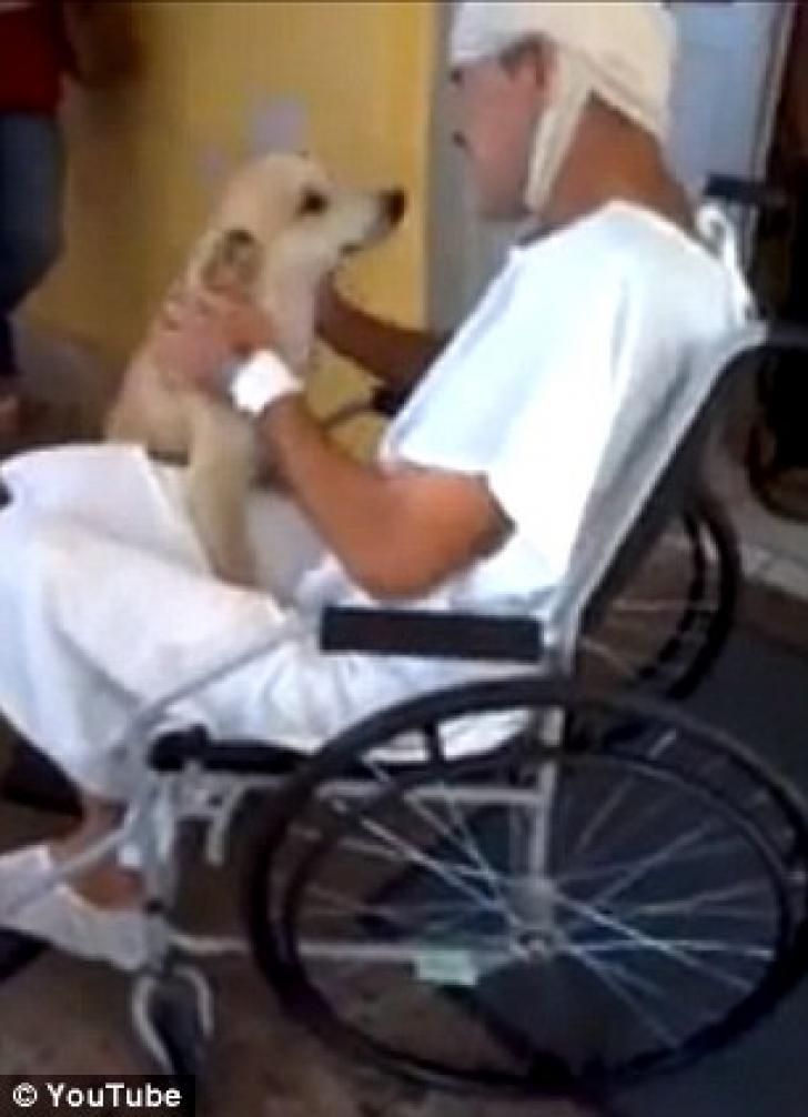 Reacţia emoţionantă a unui câine care şi-a aşteptat stăpânul în faţa spitalului timp de 8 zile