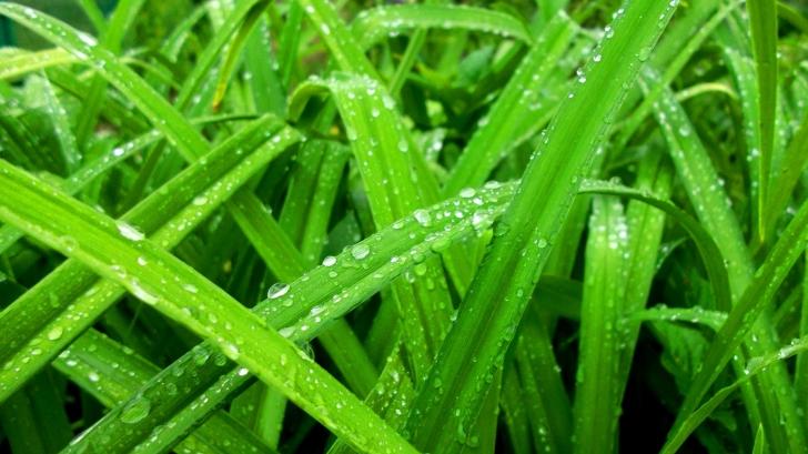 PROGNOZA METEO pentru trei zile: NU e vremea pentru ieşiri la iarbă verde în minivacanţa de 1 MAI