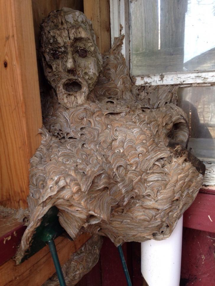 O imagine terifiantă îl aştepta pe un bărbat care a îndrăznit să intre într-o casă părăsită.