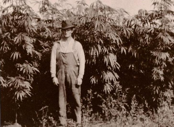 O scurtă istorie a cannabisului
