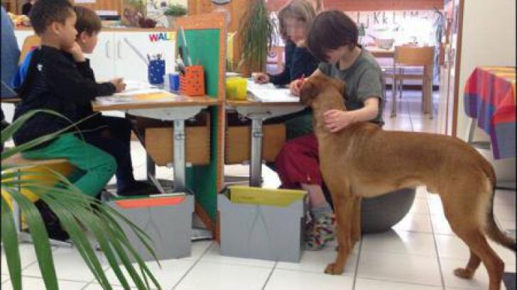 Câini folosiţi în şcolile din Eleveţia, EFECT BENEFIC asupra elevilor