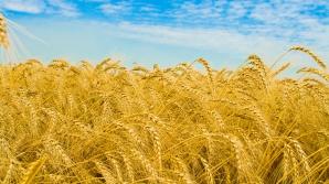 Cioloş: Europa de Est valorifică doar o treime din potenţialul agricol