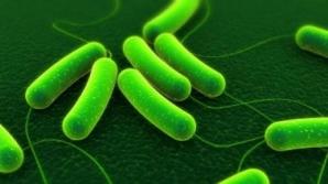 Bacterii virulente pot să supravieţuiască o săptămână în avioane