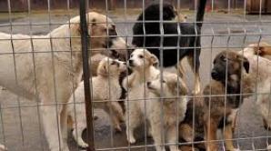 ASPA vrea să dea până la aproximativ 435.000 lei pentru curăţenia şi hrana câinilor din adăposturi