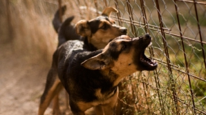COPIL de 3 ani, MUTILAT de un câine