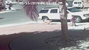 VIDEO INCREDIBIL! O pisică îşi salvează stăpânul din colţii unui câine