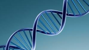 Primul organism viu semi-sintetic din lume, creat de cercetătorii americani