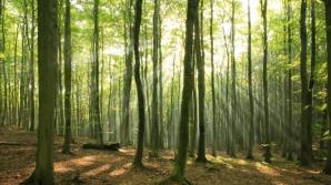 DESCOPERIRE INCREDIBILĂ într-o pădure din Vaslui