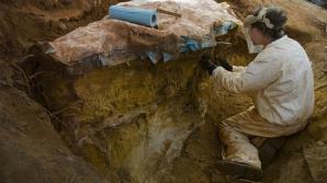 Fosilele unei noi specii de mamifer din Cretacic, descoperite de cercetători UBB lângă Alba Iulia
