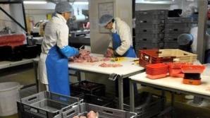 Sectorul de creştere al iepurilor pentru carne în România nu este foarte dezvoltat