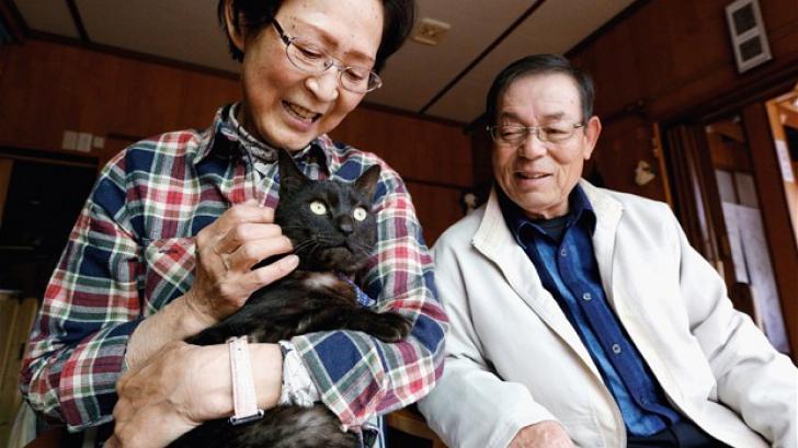 O pisică a ajuns din nou la stăpânii ei după trei ani de la dispariția în tsunami-ul din Japonia
