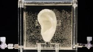 """Replică """"vie"""" a urechii lui Van Gogh, creată din celule donate de una dintre rudele pictorului"""