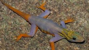 DESCOPERIRE INCREDIBILĂ: Peste 300 de noi specii de animale și plante