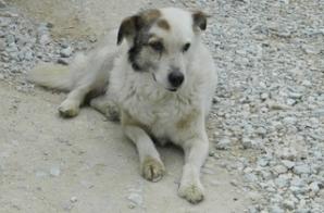 Câinele Jumară, din Gorj, şi-a pierdut stăpânul, care s-a sinucis