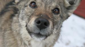ASPA: Programul nostru privind câinii continuă, dar cerem Guvernului să atace suspendarea normelor