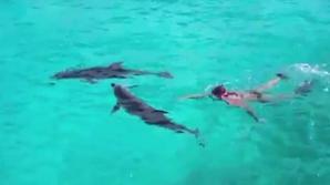 Senatorii au dezbătut timp de jumătate de oră proiectul de lege care cerea definirea delfinilor drept persoane non umane