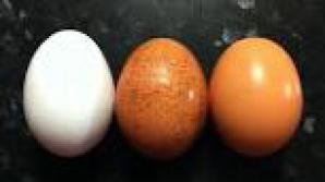 6 lucruri nestiute despre oua