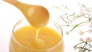 Lăptişorul de matcă – elixirul fertilităţii şi al vieţii