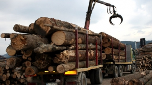 Guvernul promite un software care să urmărească orice transport de lemn