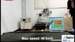 Robotul cu picioare bionice aleargă mai rapid decât Usain Bolt