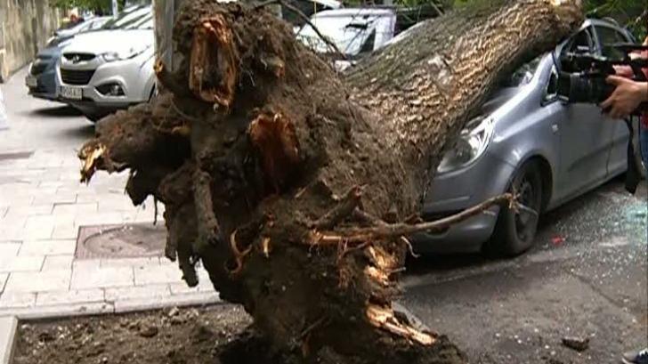 Un bărbat a murit după ce un copac s-a prăbuşit peste maşina sa, în timpul unei furtuni
