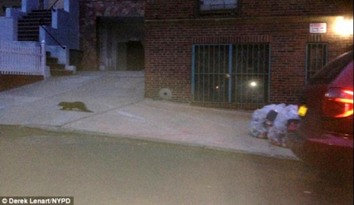 Zoologii au identificat creatura misterioasă care a îngrozit New York-ul