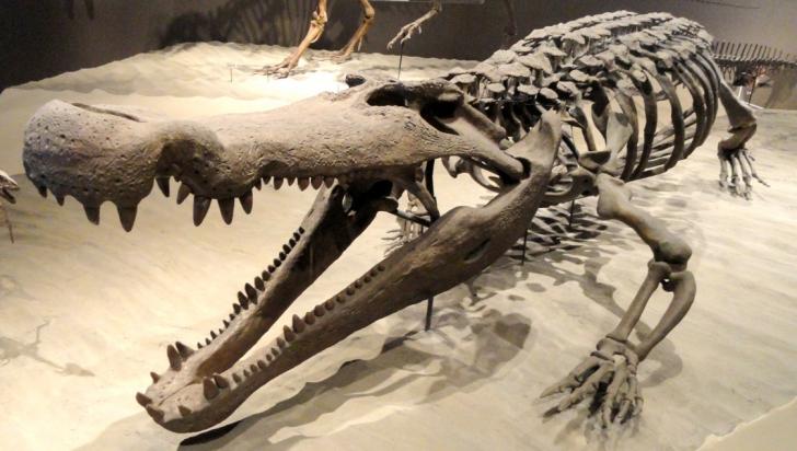 O specie de crocodili uriaşi, denumită după personaj creat de J.R.R. Tolkien